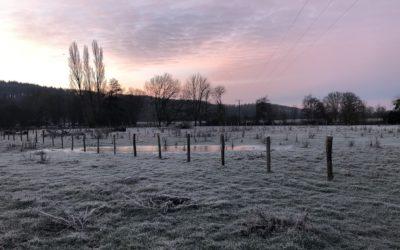 Janvier 2021 – Dans le jardin d'hiver